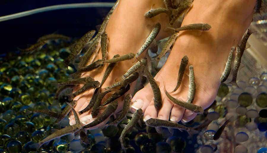 фиш пилинг кожи ступней